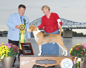 Harrier, Chance, Owned by Wendy McCleery